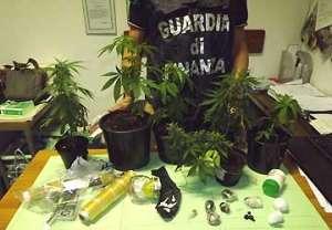 gdf_chiavari_seq_marijuana